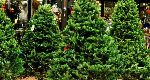candyman.sk-Vianočný stromček, živý alebo umelý