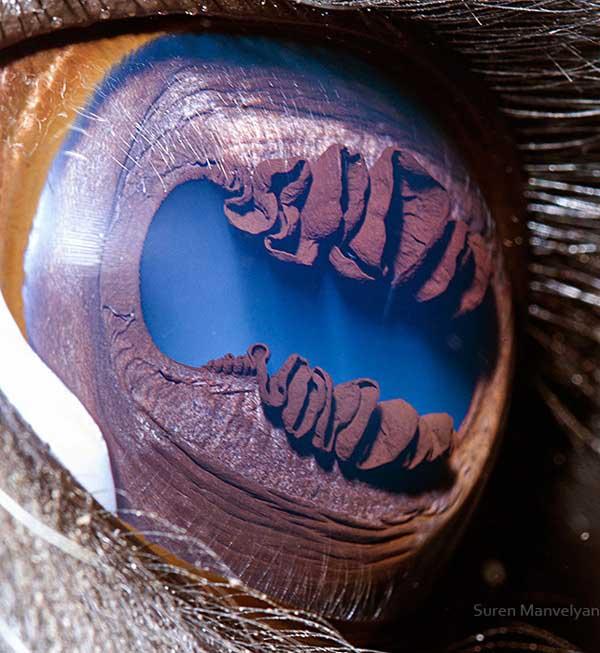 20 fascinujúcich fotografií očí živočíchov, ktoré vás ohromia-candyman.sk (1)