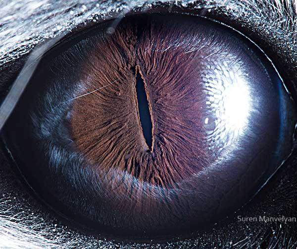 20 fascinujúcich fotografií očí živočíchov, ktoré vás ohromia-candyman.sk (11)