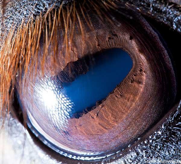 20 fascinujúcich fotografií očí živočíchov, ktoré vás ohromia-candyman.sk (13)