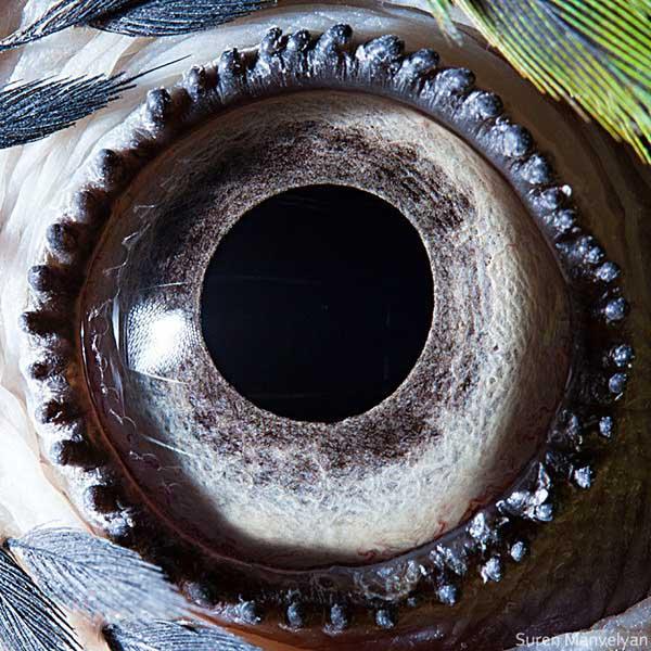 20 fascinujúcich fotografií očí živočíchov, ktoré vás ohromia-candyman.sk (14)