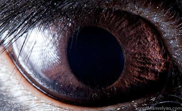 20 fascinujúcich fotografií očí živočíchov, ktoré vás ohromia-candyman.sk (7)