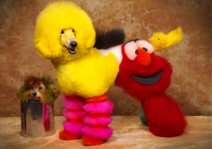 Bláznivé kozmetické úpravy psov, ktoré musíte vidieť-candyman.sk (1)