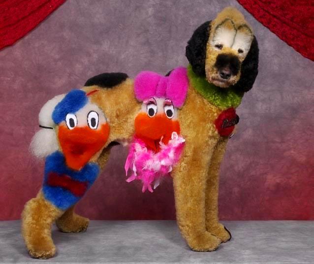 Bláznivé kozmetické úpravy psov, ktoré musíte vidieť-candyman.sk (10)
