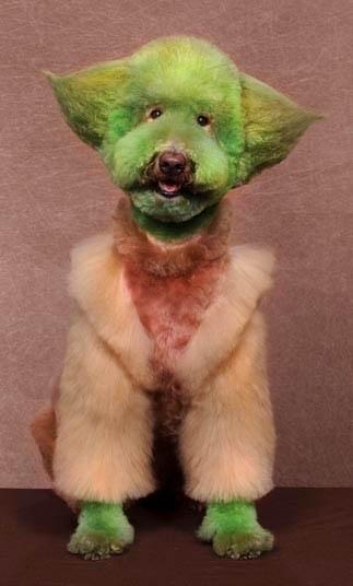 Bláznivé kozmetické úpravy psov, ktoré musíte vidieť-candyman.sk (11)