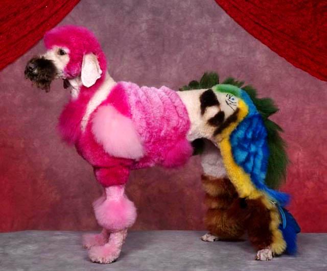 Bláznivé kozmetické úpravy psov, ktoré musíte vidieť-candyman.sk (2)