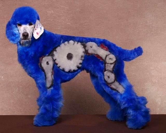 Bláznivé kozmetické úpravy psov, ktoré musíte vidieť-candyman.sk (3)