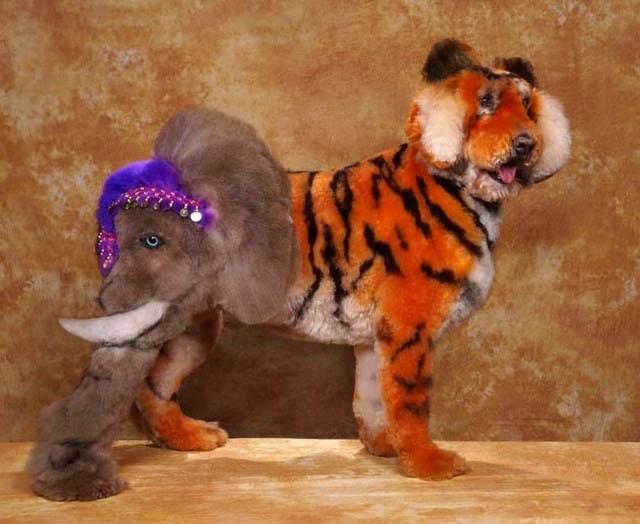 Bláznivé kozmetické úpravy psov, ktoré musíte vidieť-candyman.sk (5)