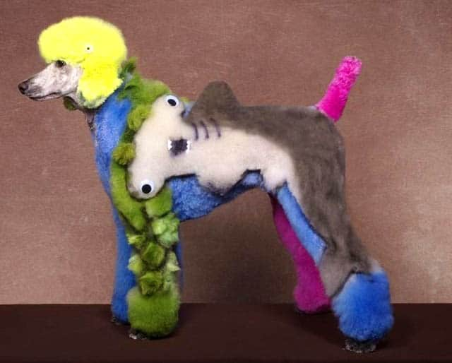 Bláznivé kozmetické úpravy psov, ktoré musíte vidieť-candyman.sk (8)