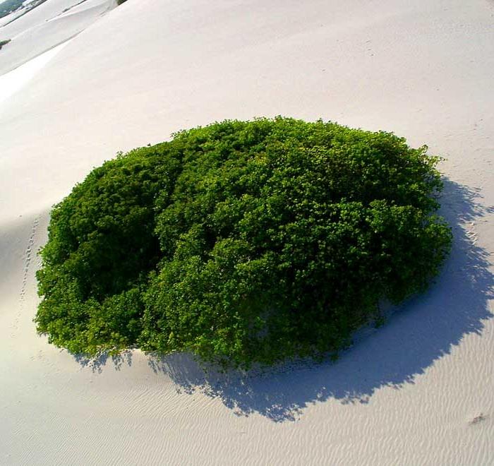 Magická pláž uprostred bielej púšte, brazílske lagúny-candyman.sk (22)