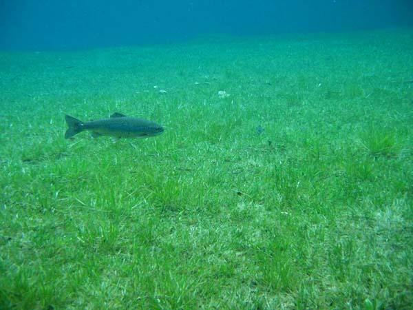 Prírodný park pod vodou, pozrite si rakúsky prírodný fenomén-candyman.sk (9)