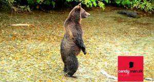 Stretnutie-s-medveďom,-čo-robiť-pri-útoku--Candyman.sk