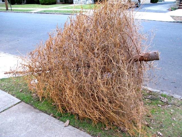 candyman.sk-Živý vianočný stromček a starostlivosť oň (2)