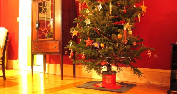 candyman.sk-Živý vianočný stromček a starostlivosť oň